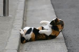 ぽっこり猫